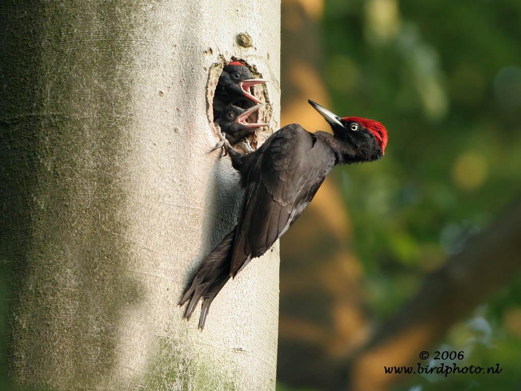 vogel met rode snavel en poten